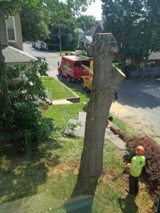 Arborists and tree