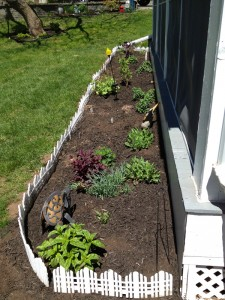 My mini deck garden is coming along nicely.