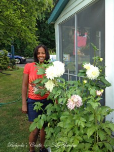 So excited about my giant Dahlias.
