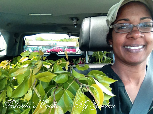 plantshopping1