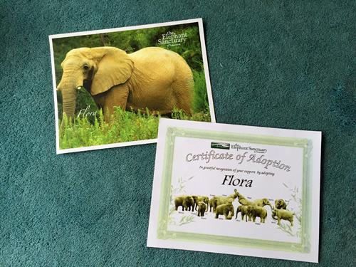 adoptelephant2